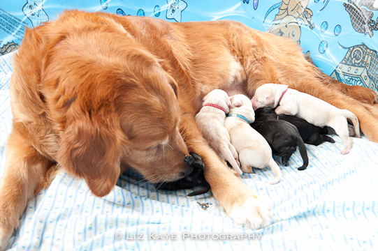 Momma with her litter by Liz Kaye